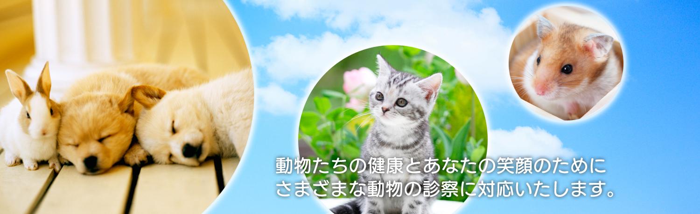 動物たちの健康とあなたのの笑顔のためにさまざまな動物の診察に対応いたします。